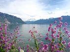 Quais fleuris de Montreux